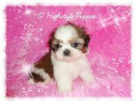 I have a 3 beautiful tiny puppies available 1 female