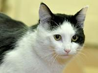 My story Tellie is a handsome black & white neutered