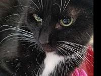 My story Temperance is a super sweet cat who is on the