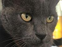 Templeton's story Templeton is a young adult cat that