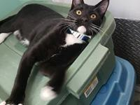 Tempo's story Tempo is a fun-loving 5 month old male