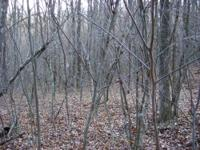 14 beautiful wooded acres in Linden, Tennessee. Great
