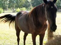 Tennessee Walker - Esmerelda - Medium - Adult - Female