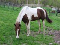 Tennessee Walker - Mia - Medium - Adult - Female -