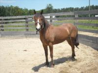 Tennessee Walker - See-me - Medium - Adult - Female -