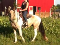 We have a 6 year old Tennessee Walker mare broke to