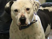 TENNY's story MEET TENNY! A 1-2 year old, male,