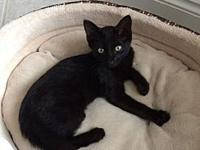 Tequila's story Playful, active, affectionate -