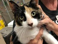 My story She's a striking tri-colored Calico with a
