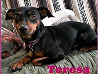 My story Teresa: 5 year old, black & rust, spayed