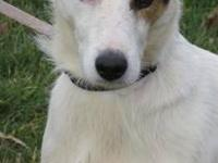 Terrier - Cooper: Adopted! - Large - Young - Male -