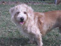 "Terrier - Amber - Medium - Adult - Female - Dog ""AMBER"""