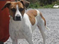 Terrier - Amy - Medium - Young - Female - Dog Amy walks