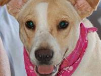 Terrier - Barton - Medium - Baby - Male - Dog Barton is
