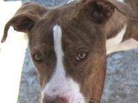 Terrier - Bashful - Medium - Adult - Female - Dog