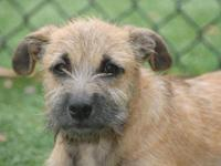 Terrier - Bee Bee - Medium - Young - Female - Dog Hi,
