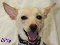 Terrier - Bitsy-local - Small - Young - Female - Dog