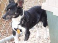 Terrier - Bosco - Small - Adult - Male - Dog Adoption