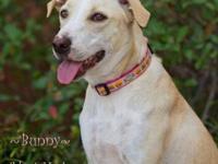 Terrier - Bunnie - Medium - Adult - Female - Dog 7/23: