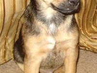 Terrier - 'chauncey' - Small - Baby - Male - Dog This
