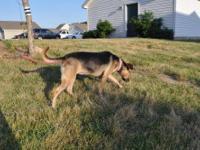 Terrier - Chloe - Medium - Adult - Female - Dog Chloe