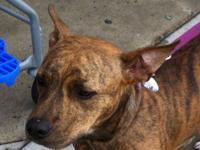 Terrier - Chloe-sponsored $40 Adoption Fee - Medium -