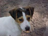 Terrier - Cookie - Medium - Young - Female - Dog Hello