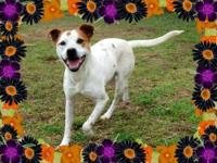 Terrier - Cricket - Medium - Adult - Female - Dog