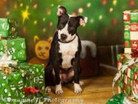 Terrier - Daisy - Medium - Adult - Female - Dog Daisy