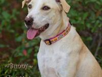 Terrier - Darby - Medium - Adult - Female - Dog Darby