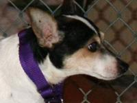 Terrier - Davey - Small - Adult - Male - Dog Davey is a