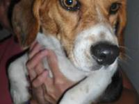 Terrier - *dixie - Medium - Young - Female - Dog