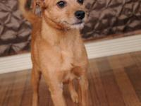 Terrier - Edison - Small - Adult - Male - Dog Edison is