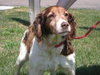 Terrier - Gertrude - Medium - Adult - Female - Dog