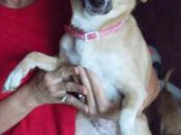 Terrier - Gina - Small - Adult - Female - Dog