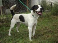 Terrier - Ginger-local - Medium - Young - Female - Dog