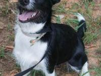 Terrier - Greta Elizabeth - Medium - Young - Female -