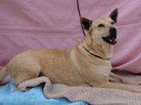 Terrier - Helga - Medium - Adult - Female - Dog Est.