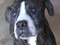 Terrier - Hope - Medium - Adult - Female - Dog Hope is