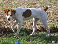 Terrier - Isabella - Small - Adult - Female - Dog