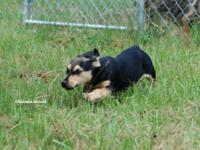 Terrier - Juliet - Small - Young - Female - Dog Hi you