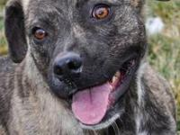 Terrier - Kiara - Large - Young - Female - Dog Kira is