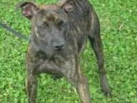 Terrier - Lilyann - Medium - Young - Female - Dog