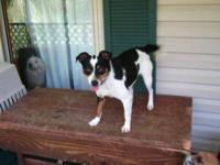 Terrier - Lizzy - Small - Adult - Female - Dog Adoption