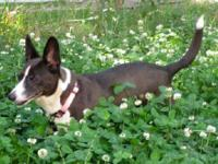 Terrier - Lucy - Small - Adult - Female - Dog Lucy is a