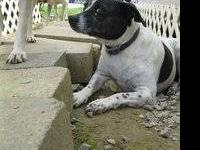 Terrier - Lucy Too - Medium - Adult - Female - Dog Lucy