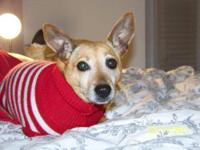 Terrier - Maggie Mae - Small - Adult - Female - Dog The