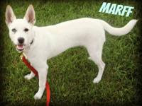 Terrier - Marff - Small - Young - Male - Dog For