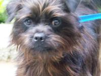 Terrier - Maxwell - Small - Young - Male - Dog Meet