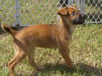 Terrier - Micky - Medium - Baby - Male - Dog Micky is a